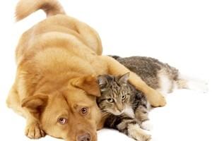 se-pueden-comunicar-nuestras-mascotas-despues-de-fallecer