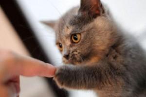 consuelo-para-nuestras-mascotas
