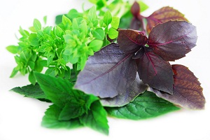 hierbas-para-reducir-el-colesterol