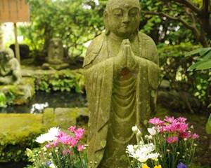jardineria-yoga-guru-interior