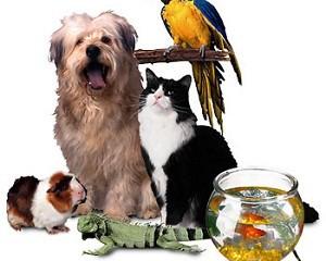 mascotas-para-tu-familia