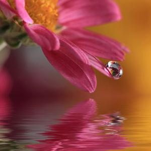 las-flores-de-bach