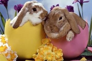 conejos-y-la-pascua