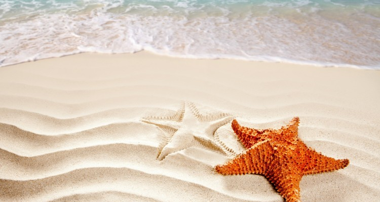 starfish-in-the-sand-22849-1920x1200
