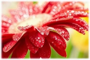 Tarot Floral-El Poder de las flores